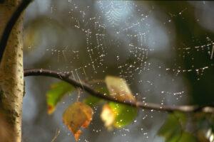 Das Spinnennetz