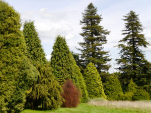 Pinetum Nymans Garden