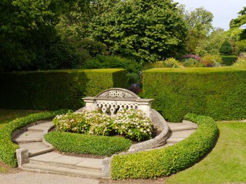 Hydrangea 'Madame Emile Mouillièrre', Ball-Hortensie am Mauer-Garten Ende, Nymans Garden