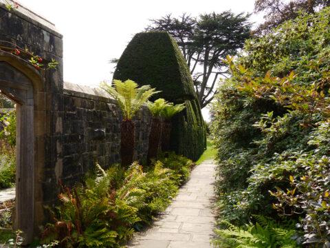Palmfarne und Farne am Eingang in den ersten Mauergarten am Haus, Nymans Garden