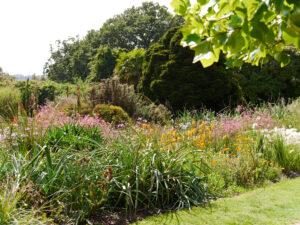 Südafrika-Beet in Nymans Garden