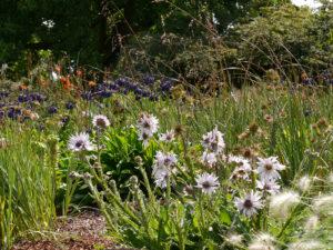 Südafrika Beet in Nymans Garden