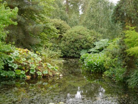 Ufer-Pflanzen-Gesellschaft am Burggraben in Scotney Castle