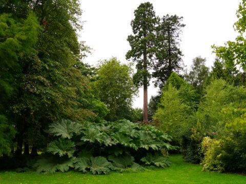 Eine der Naturkulissen zur Aufzeichnung von Shakespeare-Komödien im Park von Scotney