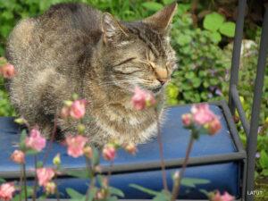 Die LATÜT-Katze auf dem Lieblingsplatz