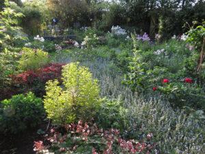 Nachmittagssonne im Romantischen Garten