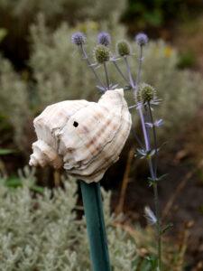 Muschel mit Eryngium