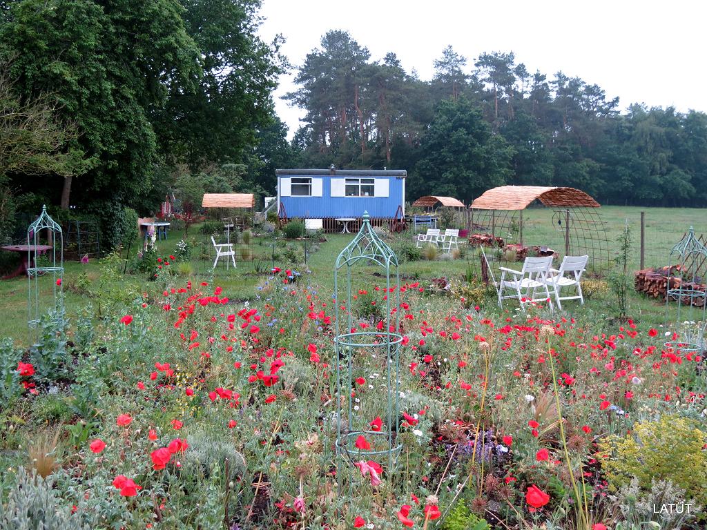 Mohn im Poetischen Garten vor dem Bauwagen