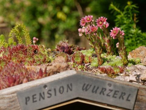 """Das Insekten-Hotel """"Pension Wurzerl"""" in Wurzerls Garten"""