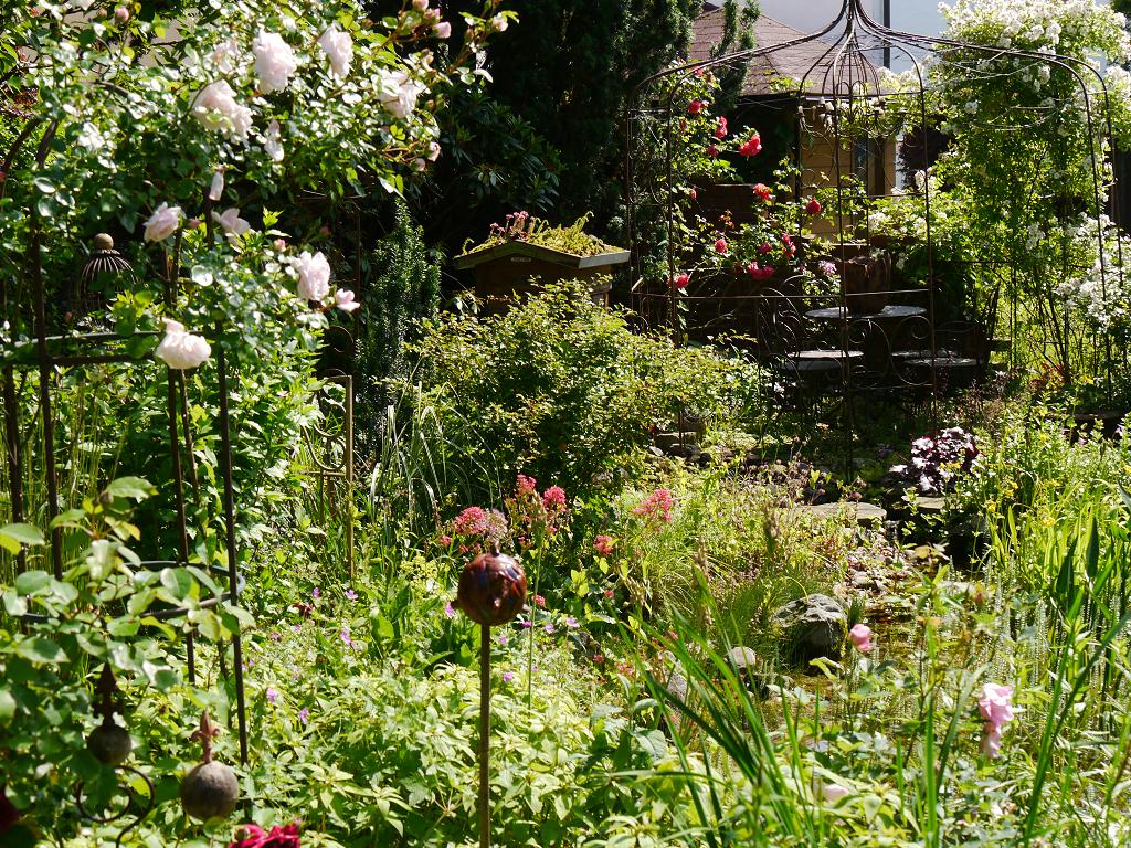 Blick über den Teich zum Rosenrondell, links Rosa 'New Dawn' in Wurzerls Garten