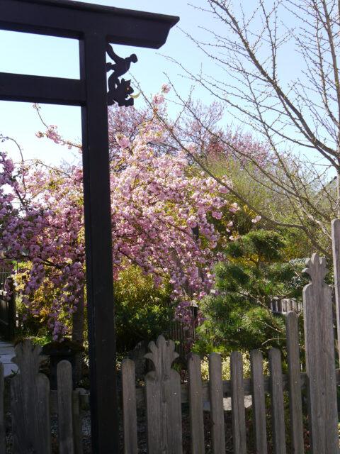 Garten-Impressionen rund ums Jahr