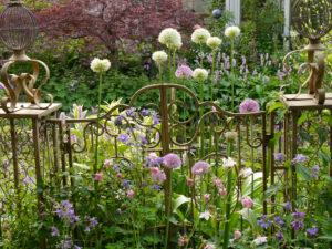 Das Paradiestor mit Allium und Akelei im Mai