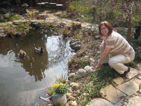 Wurzerl mit den Wildenten am Teich
