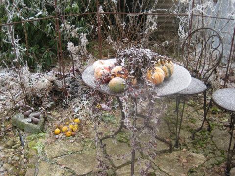 Im Rosen-Rondell im Winter