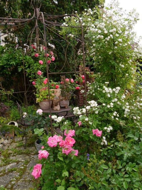 Das Rosenrondell im Juni