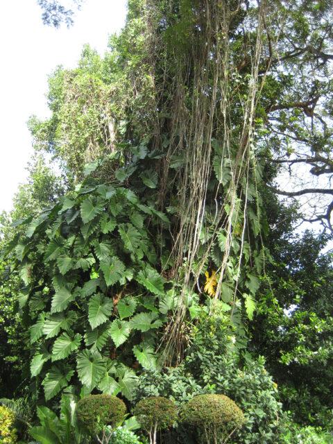 Urwaldfeeling im Botanischen Garten von Santo Domingo