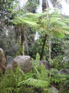 Im Farngarten des Botanischen Gartens von Santo Domingo
