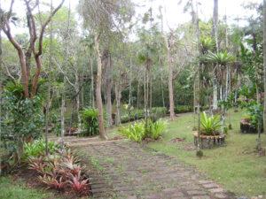 Im Bromeliengarten des Botanischen Gartens von Santo Domingo