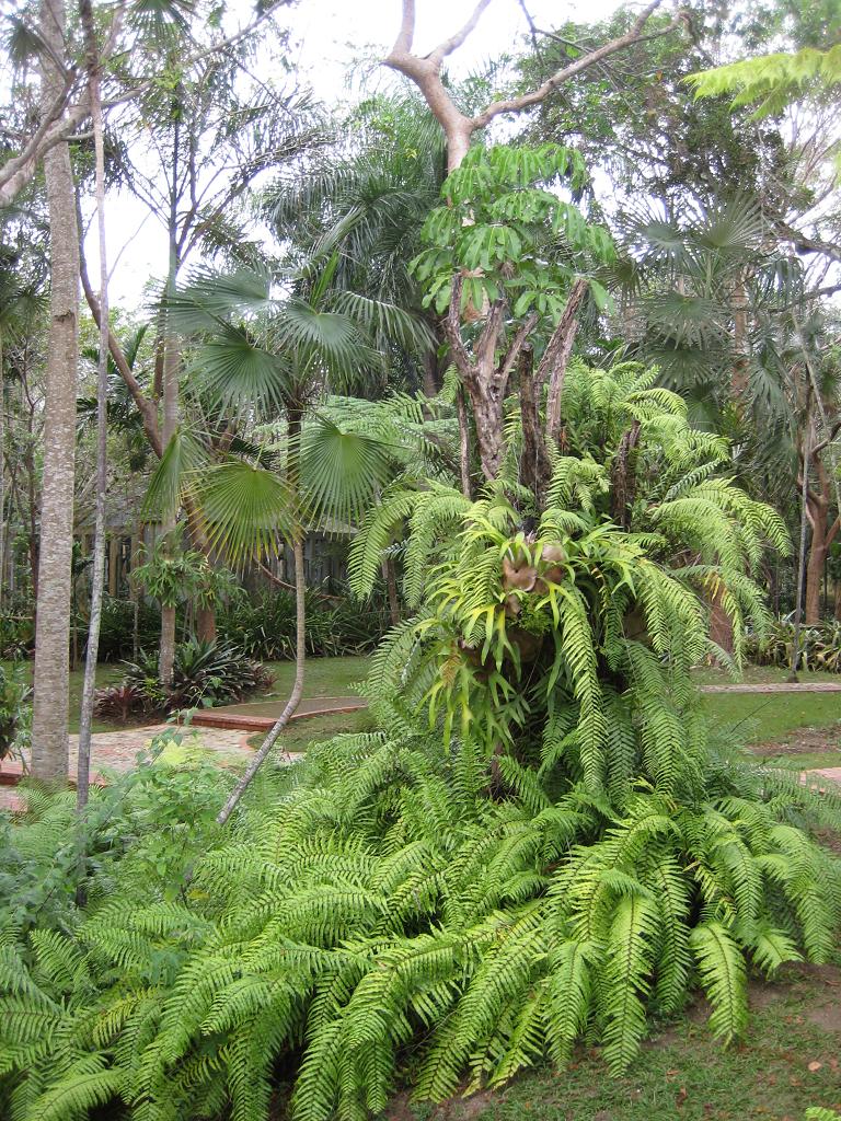 Im Farngarten des Botanischen Gartens Santo Domingo