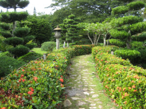 Ixora coccinea, Weg begleitende Hecke im Japanischen Garten, Botanischer Garten Santo Domingo