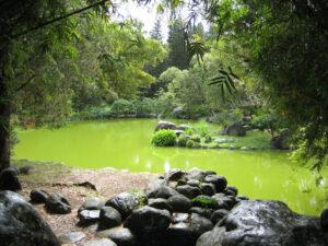 Am Teich im Japanischen Garten, Botanischer Garten Santo Domingo
