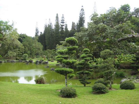 Wolkenbäume im Japanischen Garten, Botanischer Garten Santo Domingo