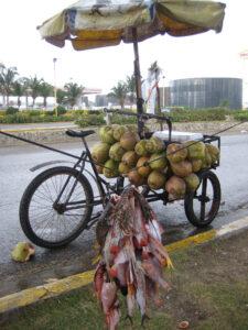Fisch, Langusten, Kokosnüsse gefällig? Der Fahrrad-Shop hat alles dabei.