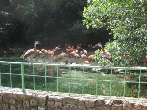 Enten und Flamingos im Zoo von Santo Domingo