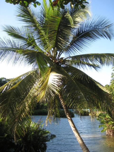 Wasserlandschaft im Zoo von Santo Domingo