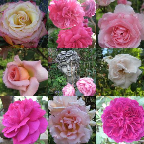 Rosen-Träume auf wenig Platz