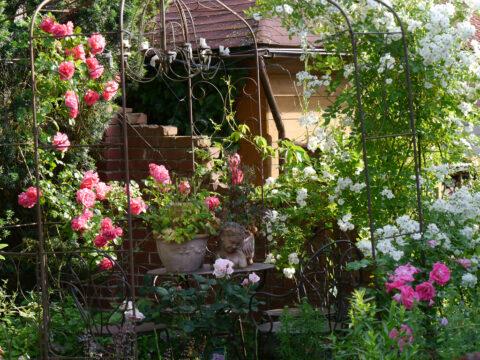 Rosen-Rondell in Wurzerls Garten mit 'Morning Jewel', 'Guirlande d'Amour' und 'Rosarium Uetersen'