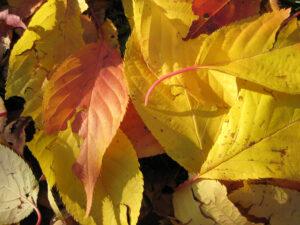 Herbstlaub in Wurzerls Garten