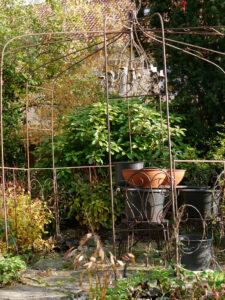 Hier im Rosenrondell von Wurzerls Garten überwintern die Tulpenzwiebeln