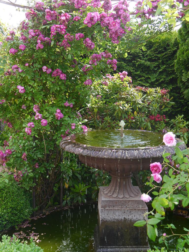 Brunnen am Garten-Eingang Petra Steiner mit Rose 'Perennial Blue'Ros