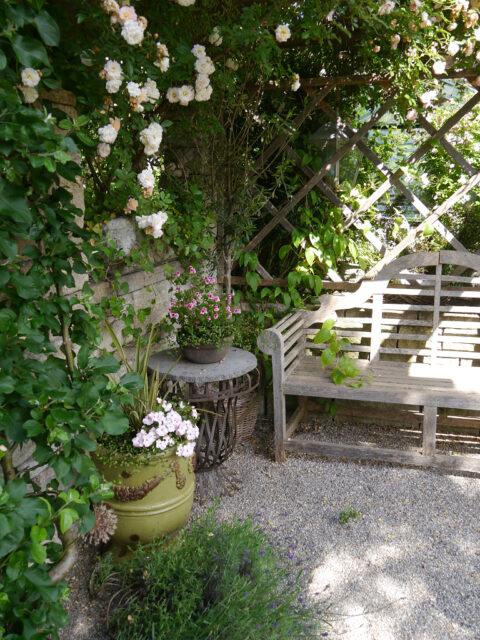 Rosa 'Ghislaine de Feligonde neben Apfelspalier im Garten Petra Steiner