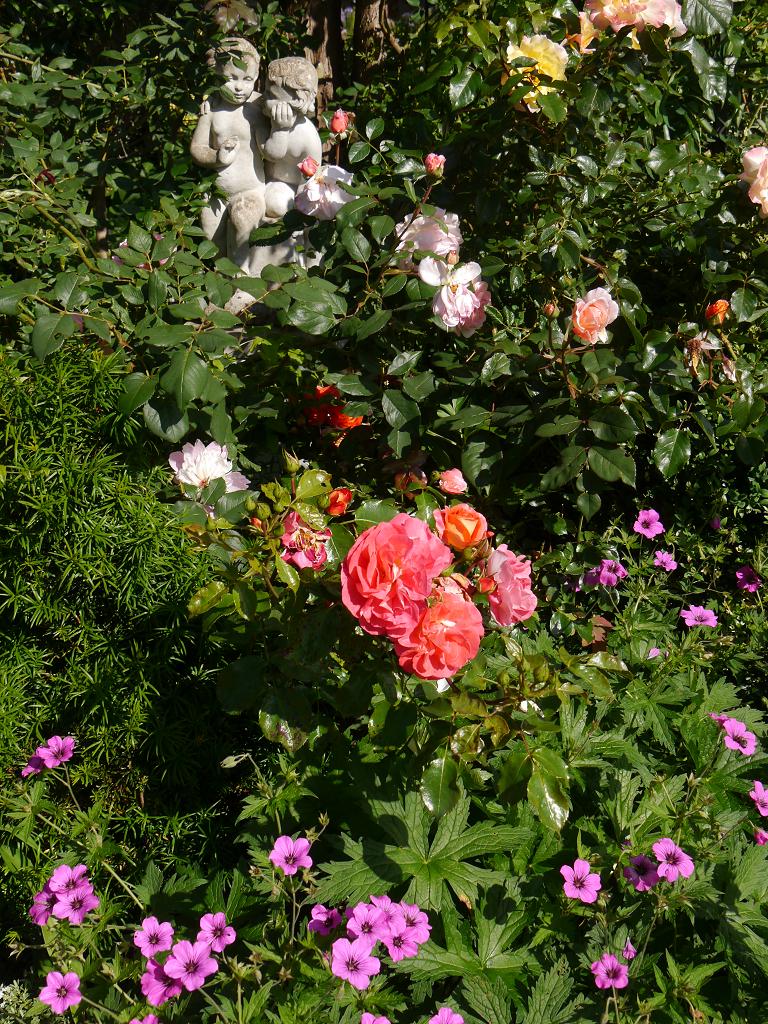 Rosa 'A Shropshire Lady', Rosa 'Moonlight' und Rosa 'Gebrüder Grimm' und Geranium psilostemon 'Patricia' im Garten Petra Steiner