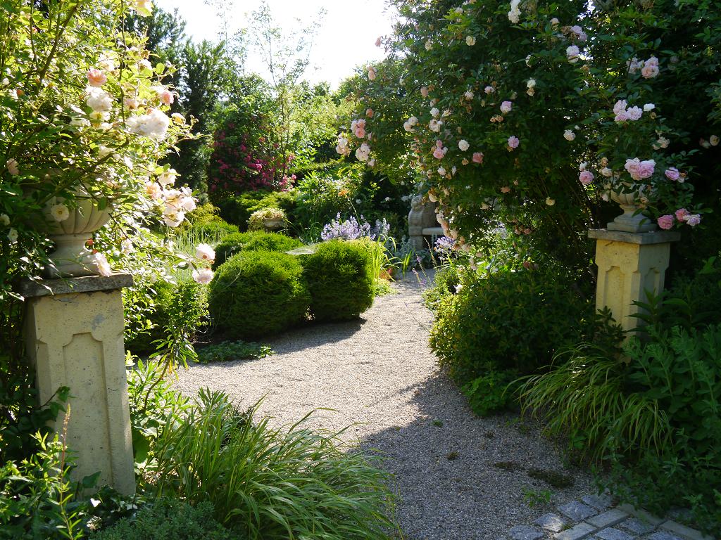 "Eingang in den ""Goldenen Garten"" mit Rosa 'Ghislaine de Feligonde', Garten Petra Steiner"