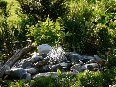 eine der vielen Wasserstellen im Garten Petra Steiner