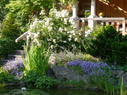 Teich mit Aufgang zur Weinlaube, Garten Petra Steiner
