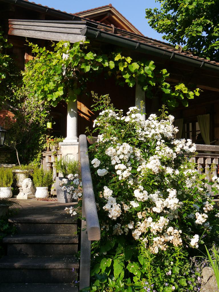 Aufgang zur Weinlaube, Garten Petra Steiner