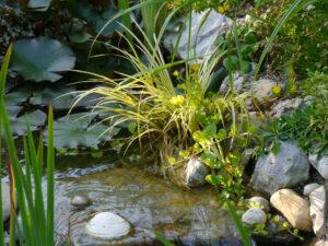 Ausschnitt aus dem Bachlauf im Garten Petra Steiner