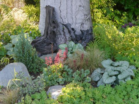 Im rechten Schattenbeet im Garten Schroth