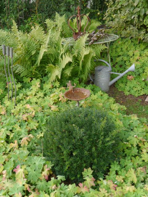 Rechtes Schattenbeet, Garten Schroth