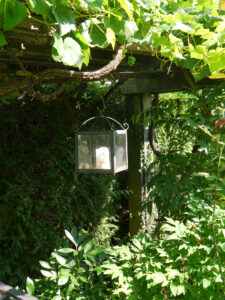 Auch  in der Weinlaube geht einem das Licht auf, Garten Schroth