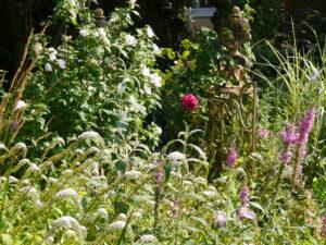 Mixed Border am Teich in Wurzerls Garten