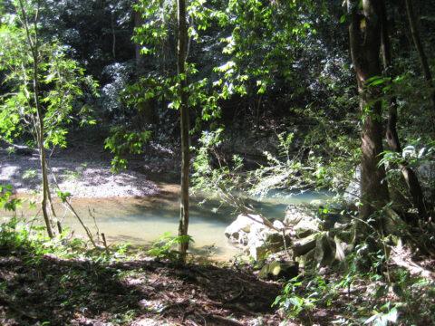 Im Urwald unterwegs in der Dominikanischen Republik