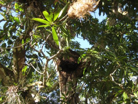 Im Urwald der Dominikanischen Republik unterwegs.