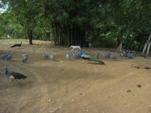 Die Zufahrt zum Rancho Capote ist für alle da. Dominikanische Republik