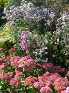 Sedum 'Herbstfreude', Astern, Eulengarten, Martina Krause,