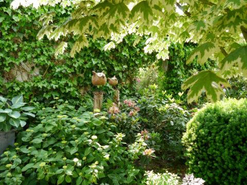 Acer platanoides 'Drummondii' Eulengarten, Martina Krause, Braunschweig